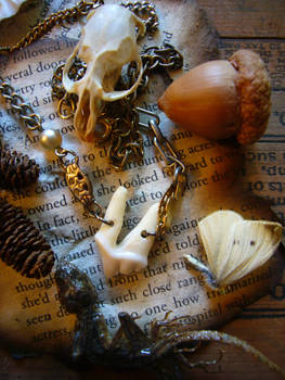 Coyote Tooth Amulet numbr 1