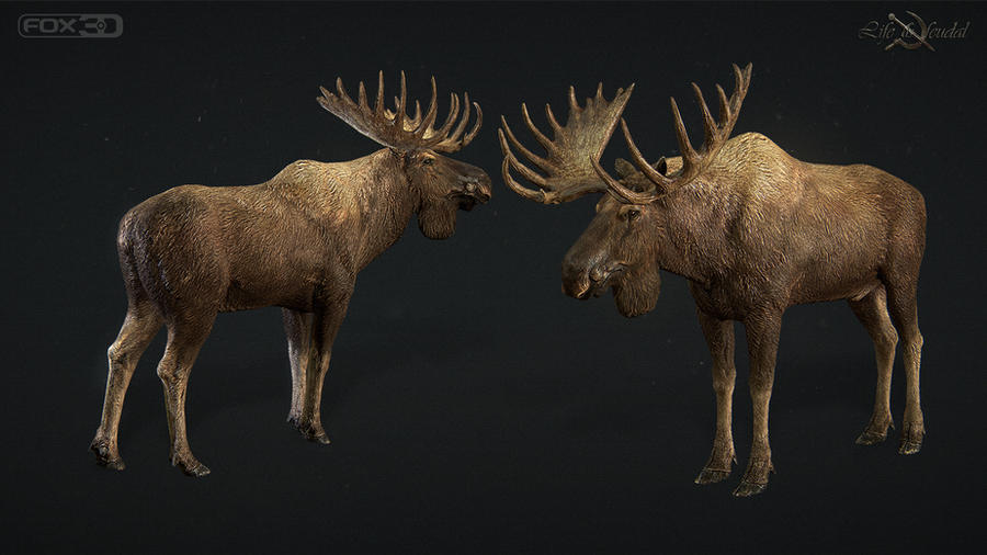 Moose by Gottsnake