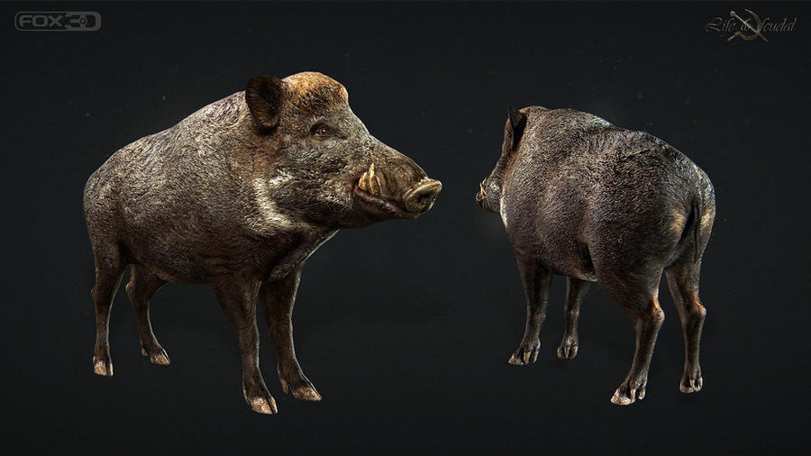 Boar by Gottsnake