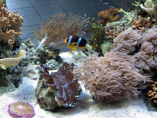 Nemo's distant cousin? by unpickedbooger