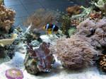 Nemo's distant cousin?