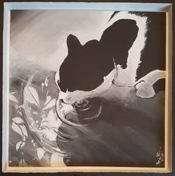 Mira - cat lapping water