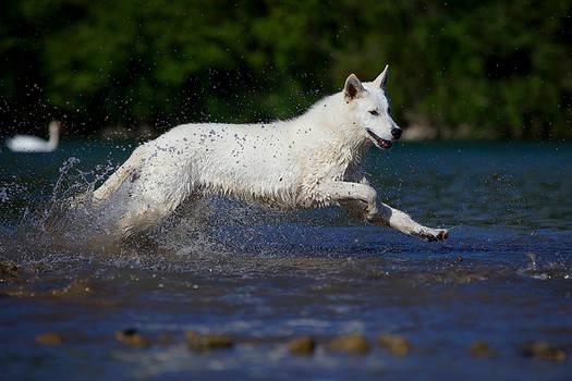 Brody runs