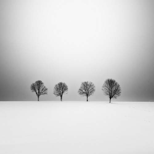 Four Trees by UweLangmann