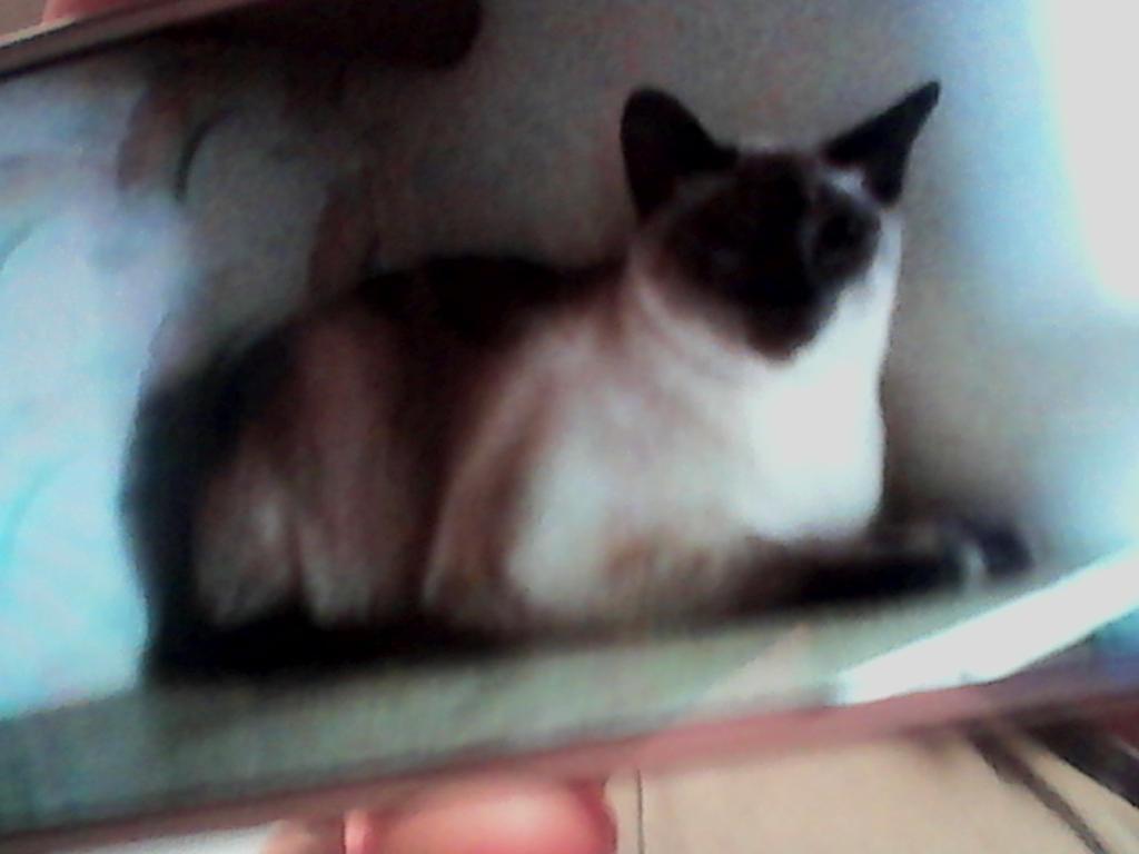 I m ting a cat X3 by Phantasm Grey34 on DeviantArt