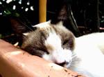 Cat Wants Sleep Pls
