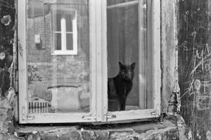 Sad cat by aniaw