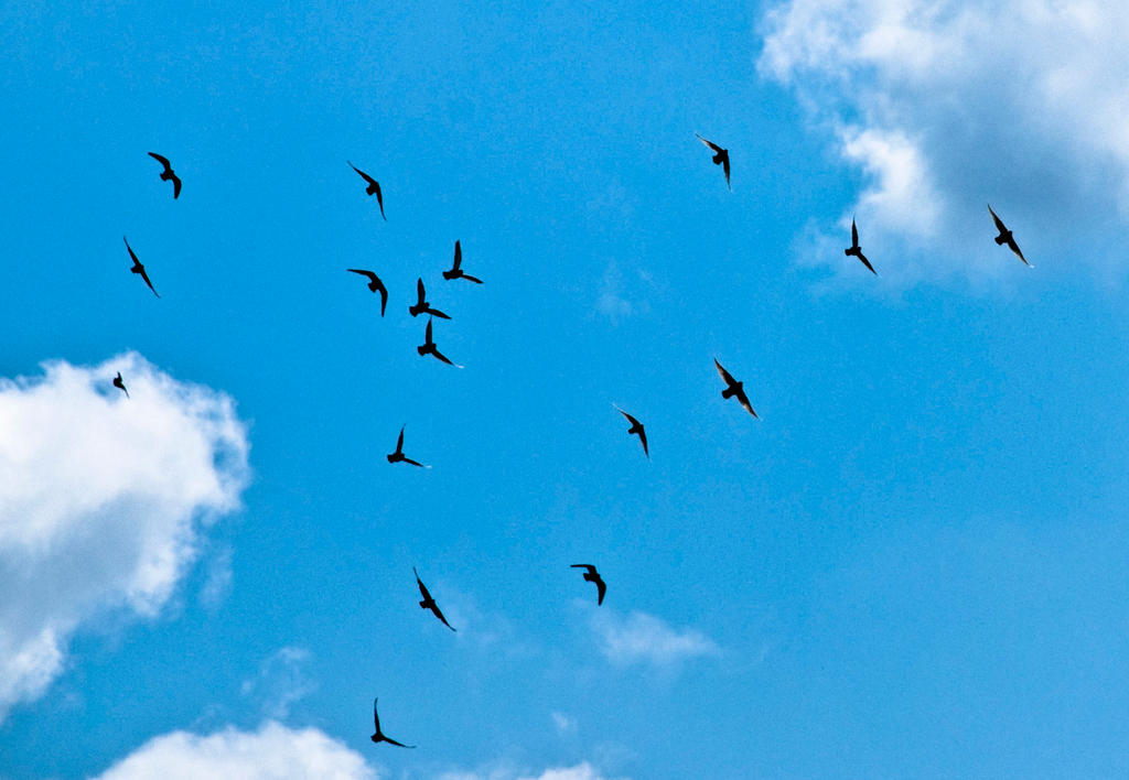 birds flying in the sky drawing