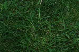 Grass by Quinnphotostock