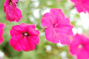 Flowers stock by Quinnphotostock