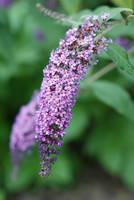 Purple flower stock by Quinnphotostock