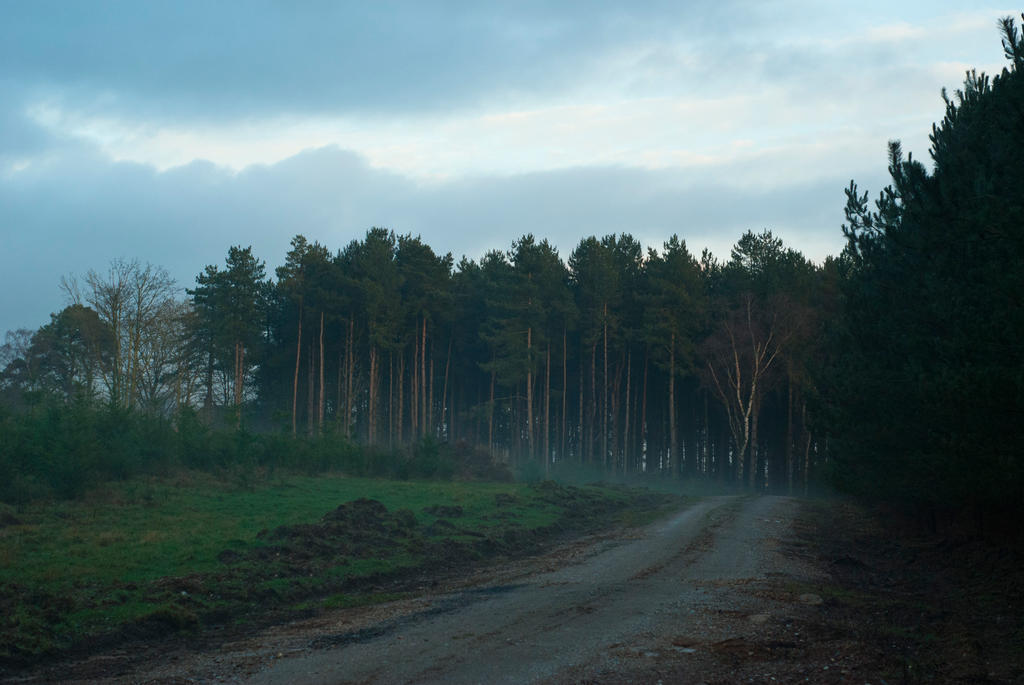 Misty landscape by Quinnphotostock