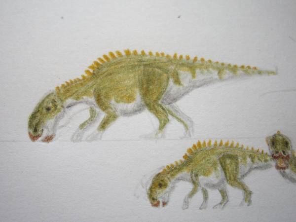 Brachylophosaurus cana...