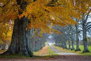 Autumn Alley by DiNoDrAwEr