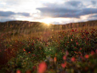 Golden Autumn by DiNoDrAwEr