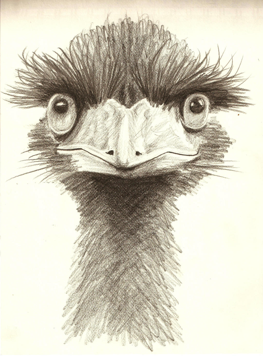 Ostrich by smixova