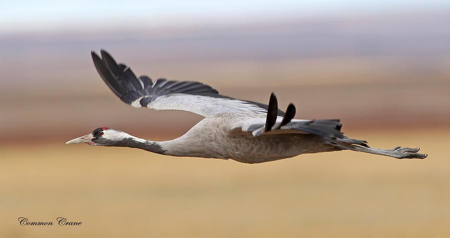 Aerodynamic by Jamie-MacArthur