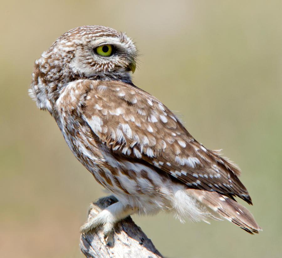Dating seiten owl