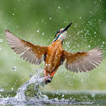 Full wing spread by Jamie-MacArthur