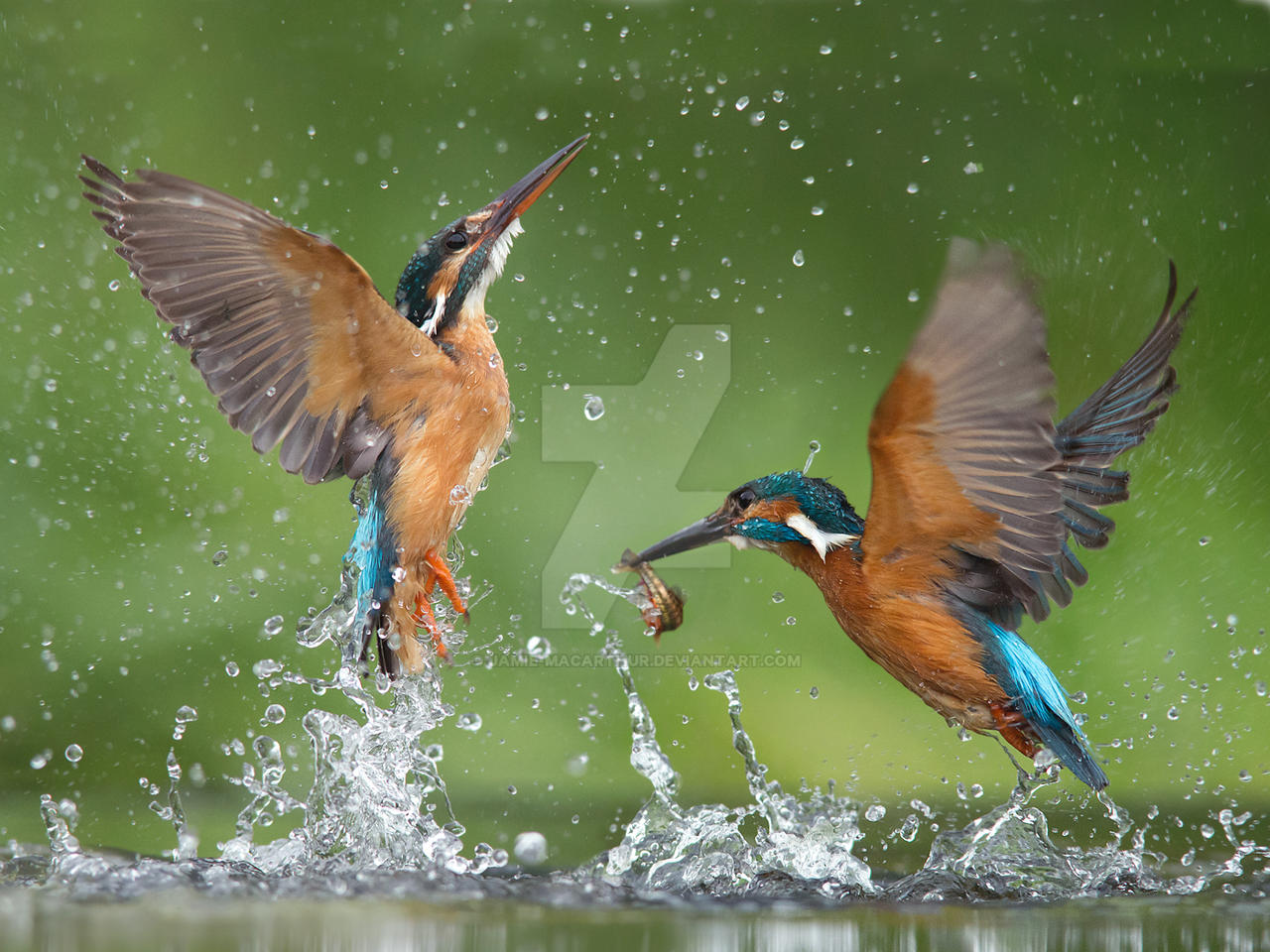 Feeding Frenzy by Jamie-MacArthur