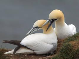 Fancy a peck on your cheek hun? by Jamie-MacArthur