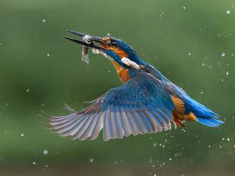 Blue by Jamie-MacArthur