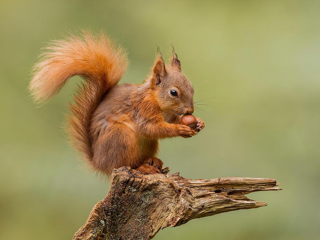 My beautiful Nut-mate by Jamie-MacArthur