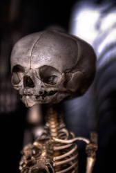 Skull. by mightyatomphoto