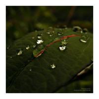 Diamonds Dew by ChimeraMyth