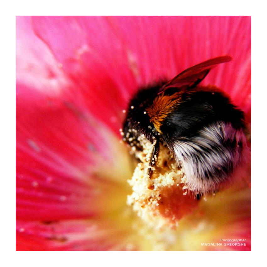 buzzz by ChimeraMyth