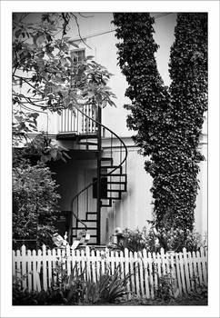 Staircase and Ivy