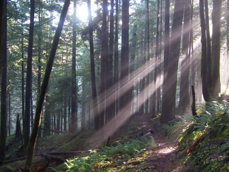 Oregon Forest 2