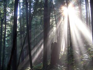Oregon Forest 3