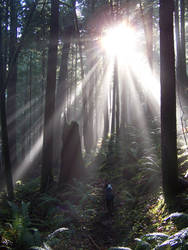 Oregon Forest 4