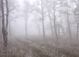 Misty Road by squidlarkin
