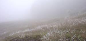 Icy Fields by squidlarkin