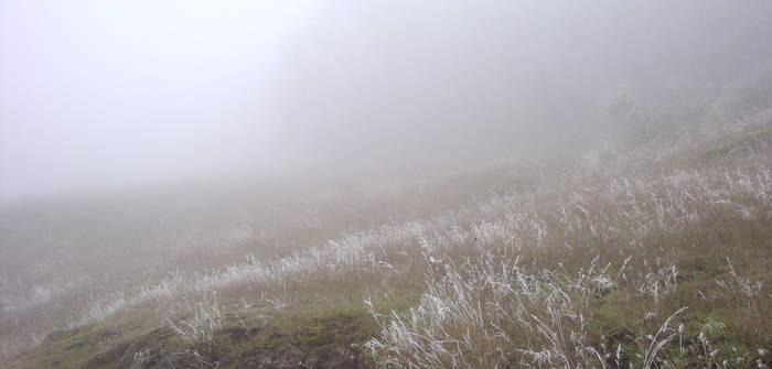 Icy Fields