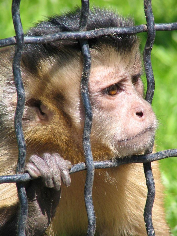 http://fc06.deviantart.com/images3/i/2005/152/b/4/sad_monkey_by_Eikka.jpg