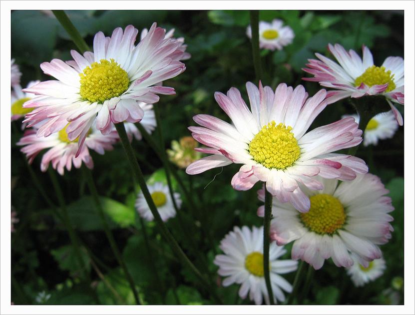 flowers by Eikka