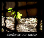 Freedom is out there by mercscilla