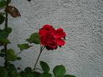 flower stock I