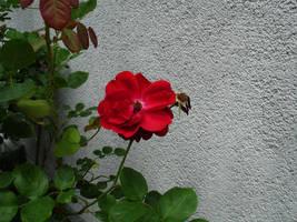 flower stock II by mercscilla