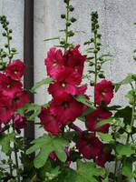 flower stock IV by mercscilla