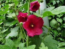 flower stock VII by mercscilla