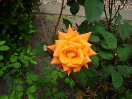 flower stock VIII by mercscilla