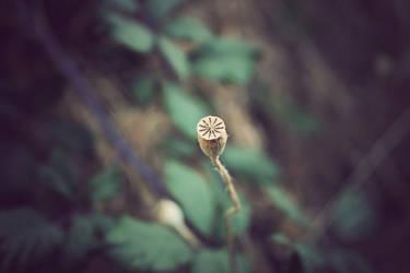 Poppy by invisigoth88