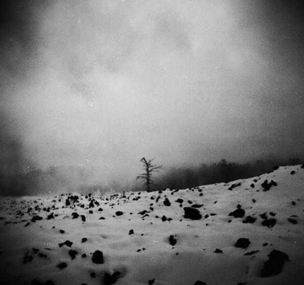 Silent tree II by invisigoth88