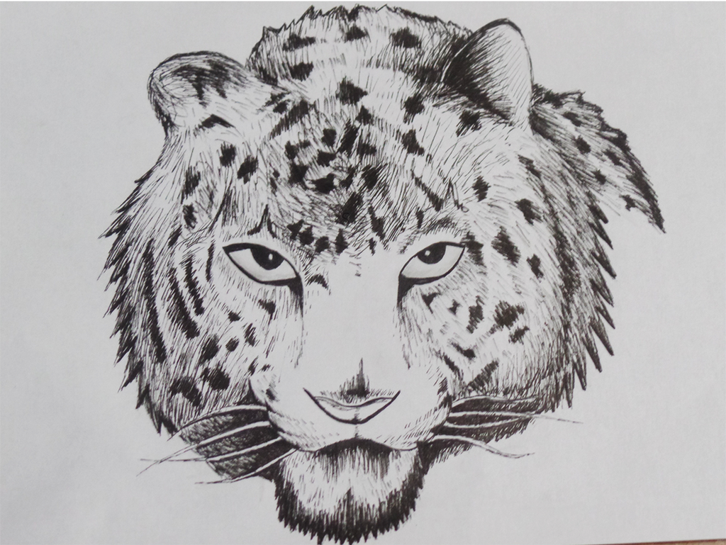 Tigre by JeeSama