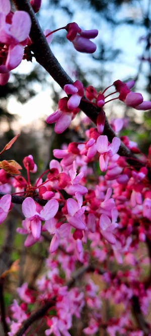 Red Bud by HaveFaithHopeLoveArt