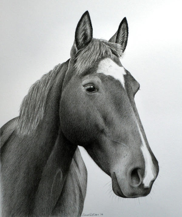Charm, 8x10 inches, graphite and charcoal by SarahEsen